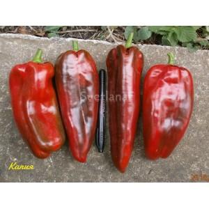 Kapia red (Капия красная)