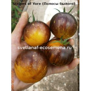 Stripes of Yore (Полосы былого)