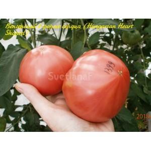 Hungarian Heart Shaped (Венгерский в форме сердца)