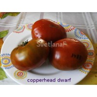 Copperhead Dwarf -F8  (медный, копперхеад гном)
