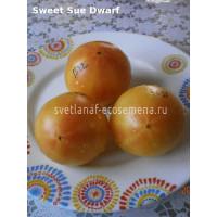 Sweet Sue Dwarf (Гном сладкая Сью)
