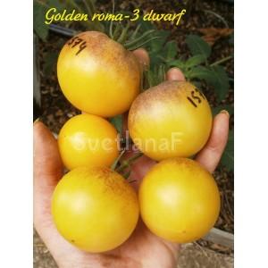 Golden roma-3 dwarf (Золотой рома гном)
