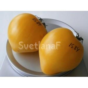 Lemon ice dwarf (Лимонный лед)