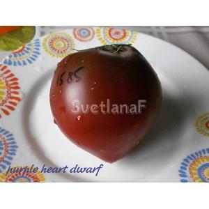 Purple heart dwarf (Пурпурное Сердце гном)