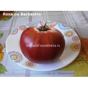 Rosa de Barbastro (Розовый из Барбастро)