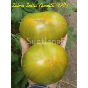 Zebra Zolta (kozula-179)