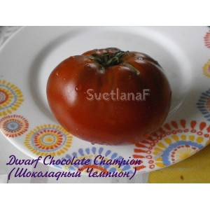 Chocolate Champion Dwarf (Шоколадный Чемпион гном)