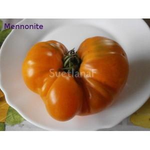 Mennonite (Менноните)