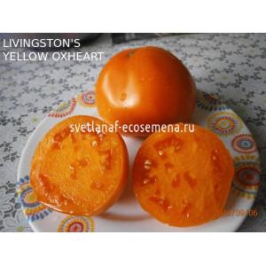 Livingston's Yellow Oxheart