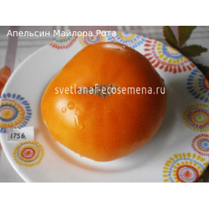 Maylor Roth's Orange