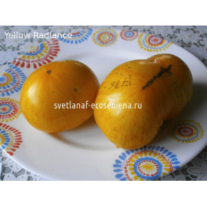 Yellow Radiance