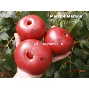 Marizol Maroon