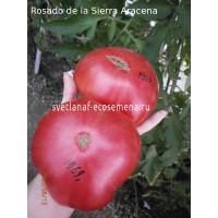 Rosado de la Sierra Aracena
