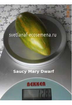 Saucy Mary Dwarf