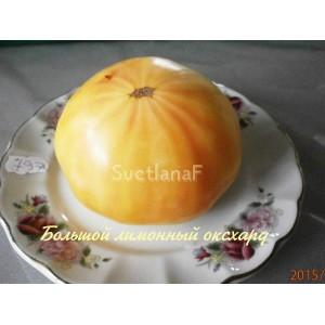 Большой лимонный оксхард (Huge Lemon Oxheart)