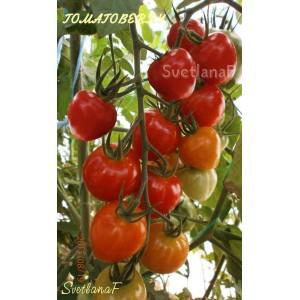 Tomatoberry Garden  (Клубничка)