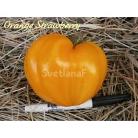 German Orange Strawberry (немецкая оранжевая клубника, земляника)