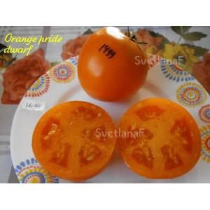 Orange pride dwarf (Гордость побережья оранжевый)