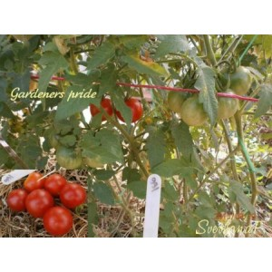 Gardener's pride (Гордость садовода)