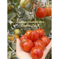 Эльберта персиковая (Elberta Peach)
