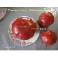 Rose du Liban (Ливанская роза)