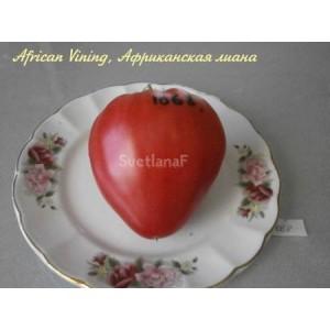 African Vining, Африканская лиана