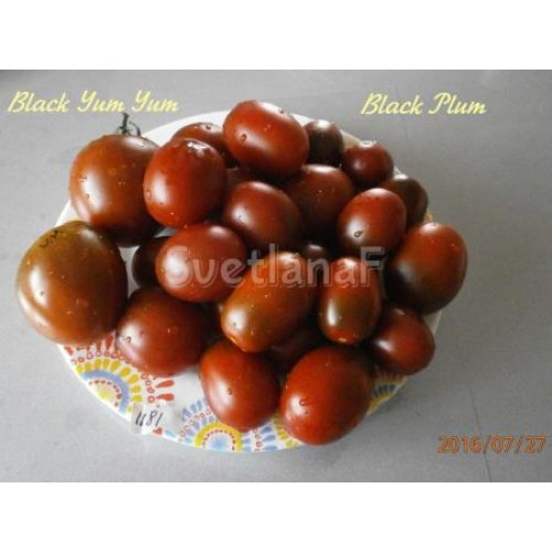 black-plum-1290-d18ed0bc-d18ed0bc-1181.j