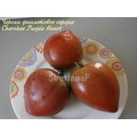 Чероки фиолетовое сердце (Cherokee Purple Heart)