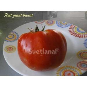Red giant banat (ред чайнт банат)