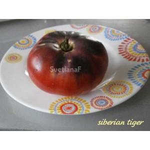 Сибирский тигр (Siberian tiger)