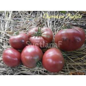 Cherokee Purple (Чероки пурпурный)