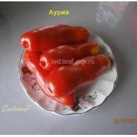 Аурия (Auriya)