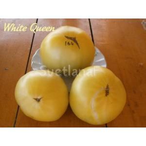 Белая королева (White Queen)
