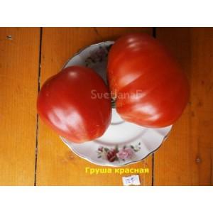 Груша красная (Pear red)