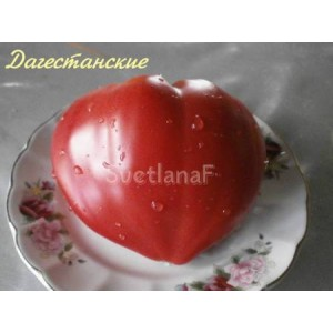 Дагестанские(Dagestanskie)