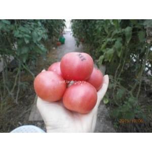 Персик красный (Red Peach)
