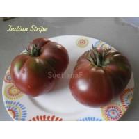 Индийский полосатый (Indian Stripe)