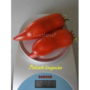 Polisch linguisa (Польский лингвиза)