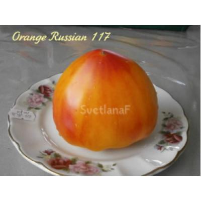 Оранжевый русский 117 (Orange Russian 117)